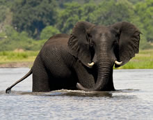 Exclusive Safaris in Africa